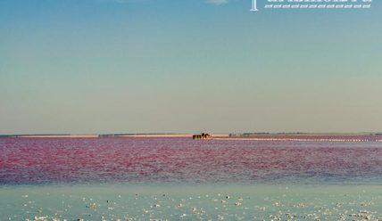 Сасык-Сиваш — розовое озеро в Крыму